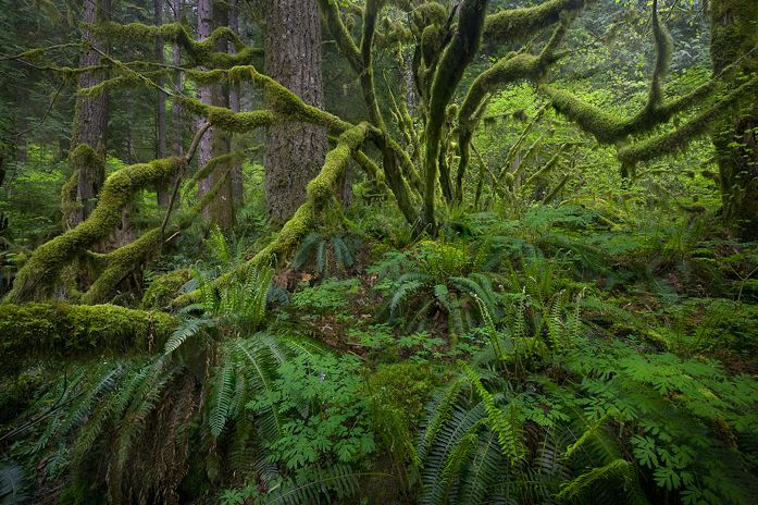 John Thackara on Sustainability, Design and Old Growth